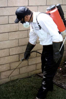 Pest Control Insurance In Ireland